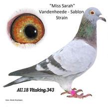 miss-sarah